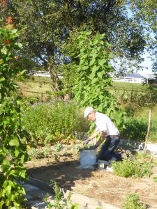 Arbeiten in Gemeinschaftsgärten